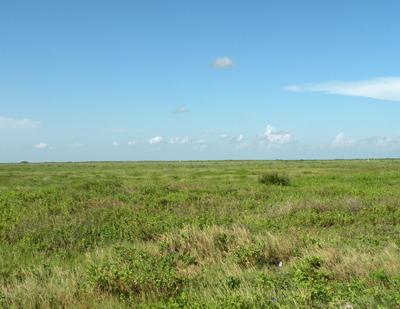 High island prairie