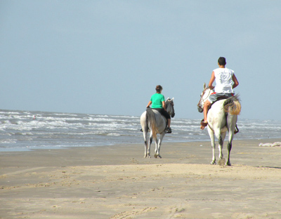 Surfside Horses